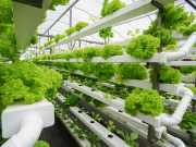 Greenhouse farming - the future for Asia?