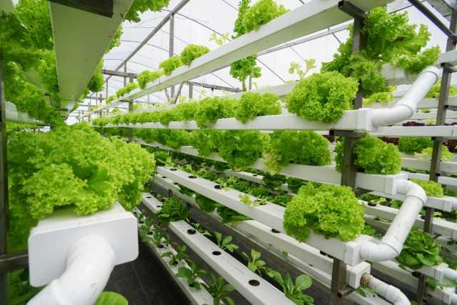 Greenhouse Farming - die Zukunft für Asien?